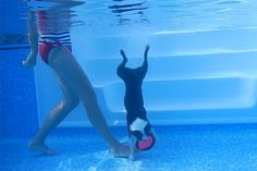 Howie's Diving to the Bottom of the Pool!