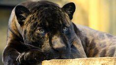 Parrainez un animal du Parc zoologique de Paris
