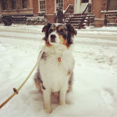 Bella in the Snow | What Sarah Knows