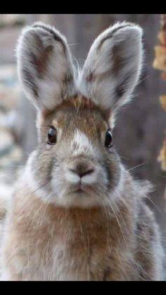 rabbit, bunny, and cute afbeelding The Animals, Baby Animals, Funny Animals, Cute Creatures, Beautiful Creatures, Animals Beautiful, Funny Bunnies, Cute Bunny, Bunny Bunny