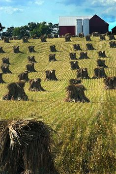 Amish barn The Amish do everything by low-tech means (they don't even use electricity) which leaves the visitor in awe of these beautiful piles of hand stacked wheat