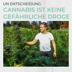 Hanf verabschiedet sich endgültig aus der Liga der harten Drogen mit Heroin, Kokain. Grund dafür ist eine Entscheidung der Vereinten Nationen. Nahezu zeitgleich gibt auch die EU bekannt: CBD ist kein Suchtmittel. • Wieder zwei wichtige Schritte, welche die nachhaltige Nutzung von Hanf erleichtern. • Was denkst du zur Entscheidung der UN und EU? Cannabis, Omega Fettsäuren, Blog, Hemp Seeds, Sustainability, Plants, Health, Ganja, Blogging