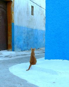 Street cat in Morocco
