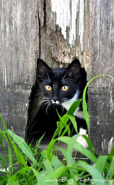 Kitty | Flickr - Photo Sharing!