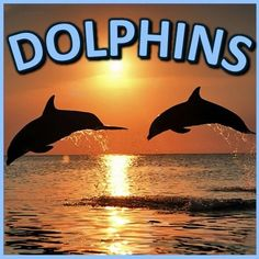 Dolphins PowerPoint and Activities:  Learn all about dolphins in this interactive PPT presentation. This nonfiction resource about dolphins is full of information, photos, illustrations, riddles, and fun facts. It�s designed for teachers, students, and parents! When it's over, challenge the kids with some higher level thinking activities. by Ryan Nygren photo by Angell Williams @ https://www.flickr.com/photos/53357045@N02/4973039335/in/photostream/
