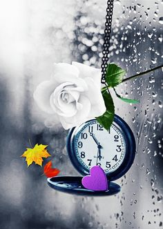 """""""BüŞrA"""" Clock Wallpaper, Cellphone Wallpaper, Flower Wallpaper, Wallpaper Backgrounds, Cool Pictures For Wallpaper, Love You Images, Beautiful Flowers Wallpapers, Clay Flowers, Belle Photo"""
