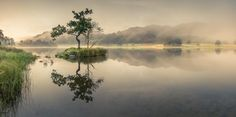 Rydal Tree | Lake Moments