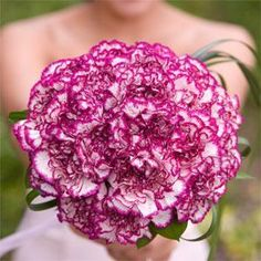 One of my all time favorite flowers... rendezvous carnations