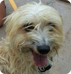 Burlington, WA - Terrier (Unknown Type, Medium)/Poodle (Miniature) Mix. Meet Terrance, a dog for adoption. http://www.adoptapet.com/pet/11638847-burlington-washington-terrier-unknown-type-medium-mix