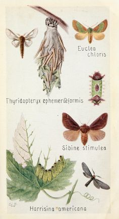 Field book of insects New York,G.P. Putnam's sons,1918