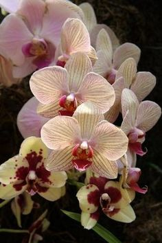 orchids by kathleen