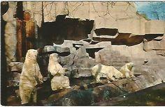 Vintage  Postcard Playful Polar Bears at by postcardsintheattic, $2.99 New Listing: #postcard #ephemera #antique #vintage #vintagepaper #etsy #antiquepaper #collectible #antiquepostcard #vintagepostcard