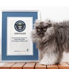 pets with guinness world records amazing things pinterest