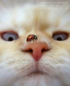 Que ven mis ojos!!!