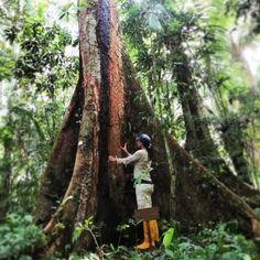AGENDA: Desarrollo de un Modelo de Ecoturismo con la herramienta de apadrinamiento del bosque en la cuenca del rio Piedras Madre de Dios Trunks, Plants, Templates, Woods, Innovative Products, Day Planners, Events, Drift Wood, Tree Trunks
