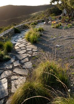 Minimal plantings – dry laid flagstone walk – grass garden – muhlenbergia rigens – less is more in this garden!
