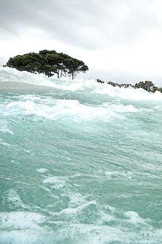 Alcudia Mallorca | Ocean and trees