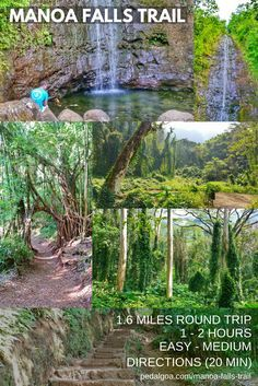 Hiking Hawaii: Manoa Falls Trail. US hiking trails, Oahu hikes for Hawaii vacation! Best Oahu hiking trails gives you things to do near beaches for swimming, snorkeling! List, planning tips from Waikiki, Honolulu. Morning hiking, afternoon shopping, eating food at restaurants! Outdoor travel destinations for the bucket list for budget adventures! Add outfits, what to wear in Hawaii, what to pack for Hawaii packing list. Oahu hikes pocket guide, Oahu travel guide book pdf, map. #hawaii #oahu
