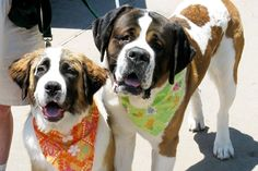 Think You Know Dog Drool? Meet These 5 Deliciously Drooly Breeds