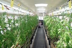Urban Roots turns bus into hydroponics garden