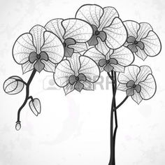 black and white flowers: Hand Drawing Orchid Flower. Stock Photo