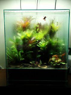 96 Best Dart Frog Vivarium Images Terrarium Ideas Terrariums