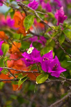 Tropical flowers by bella