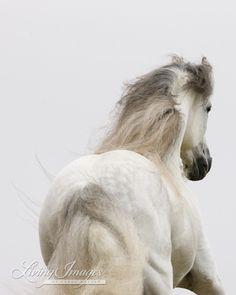 Sunrise Run - Fine Art Horse Photograph - Horse