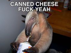 Anteater with cheese.