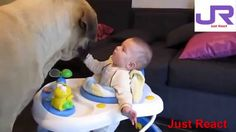 Big Dogs Playing with Babies Compilation React) Cute babies playing with dogs and this dogs meeting babies for the first time. Also babies love playing with dogs. Played Yourself, Baby Play, Big Dogs, Dares, Baby Love, Your Child, Cute Babies, Pitbulls, Entertaining