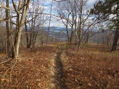 hiking in new hampshire   Looking down the Red Hill Loop Trail, Moultonborough