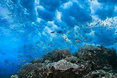 Fauna marina al Cap de Creus