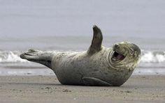 Semana da Foca na Praia*. | Os 35 momentos mais felizes na história dos animais