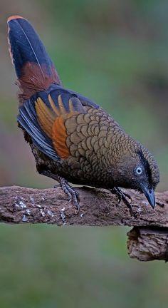 Kinds Of Birds, All Birds, Little Birds, Love Birds, Most Beautiful Birds, Pretty Birds, Exotic Birds, Colorful Birds, Beautiful Creatures