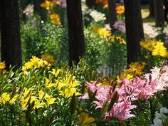 谷汲♪ ユリはこれにて終了。 紫陽花→百合→ではでは 次は向日葵����かな。  #日本 #japan #旅 #trip #一人旅 #ひとり旅 #癒し #healing  #風景 #景色 #scenery #hiking  #ハイキング #山歩き  #トレッキング #自然 #nature  #山 #mountain  #ユリ #百合 #ゆり #lily #花 #お花 #flower #木 #tree #新緑 #thefreshgreen http://misstagram.com/ipost/1546962429647594511/?code=BV36iI0BSQP