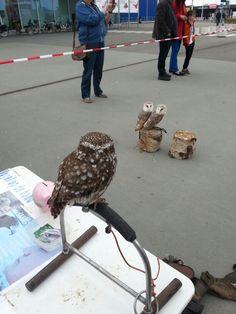 Vogelshow voor de Ikea in Duiven.