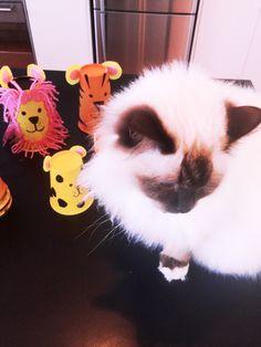 Big Cat Cup Craft  https://littlemulberryproject.wordpress.com/2016/11/11/big-cat-cups/