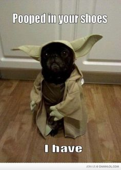 Yoda dog - too funny to not pin!