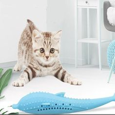 Soft Silicone Mint Fish Cat Toy Catnip Pet Catnip Toys, Pet Toys, Pet Supply Stores, Fish Cat Toy, Buy Pets, Online Pet Supplies, Teeth Cleaning, Pet Accessories, Cats And Kittens