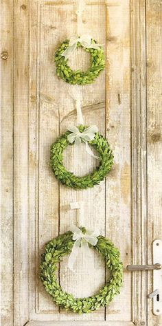 So simple but so pretty. We just got these in at Summer Snow Gift  Decor!  Preserved Boxwood Wreaths!