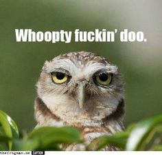 Funny pictures about Unimpressed Owl. Oh, and cool pics about Unimpressed Owl. Also, Unimpressed Owl photos. Haha Funny, Funny Jokes, Funny Stuff, Funny Things, Crazy Things, Random Stuff, Tired Funny, Tgif Funny, Frases