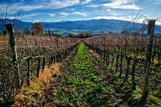 Orcia Valley and its wineyards overlooking Mount Amiata