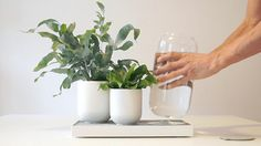 Tableau is the zero-electricity self-watering planter by Pikaplant. Remove and refill the reservoir once a month.