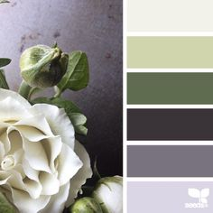 Living room grey rose design seeds new ideas Colour Pallette, Colour Schemes, Color Combos, Color Patterns, Design Seeds, Color Concept, Dining Room Blue, Dining Rooms, House Paint Exterior