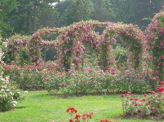 Elizabeth Park: rose gardens in Hartford, Connecticut