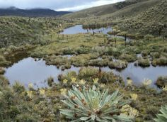 Bogotá consiguió $97 mil millones con el fin de crear un corredor ambiental para la protección de este tipo de ecosistemas