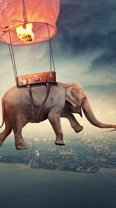 Image about elephant in Art🎨 by Natascha on We Heart It Desktop Background Pictures, Blur Background In Photoshop, Photography Studio Background, Best Photo Background, Studio Background Images, Background Images For Editing, Banner Background Images, Picsart Background, Elephant Background