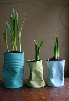 Fun, quick DIY - Paint old tin cans and use to plant bulbs like hyacinths/daffs for a quirky display in your favorite colors.