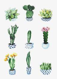 Résultats de recherche d'images pour « dessins cactus »
