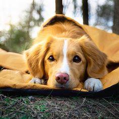 Image may contain: dog and outdoor    #Regram via @BwUvIuiAgtL